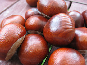 Gaštany, chestnuts