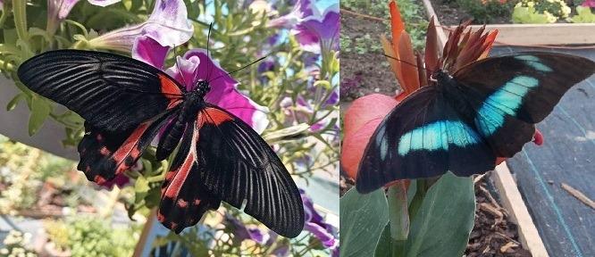motýlia záhrada na paseke